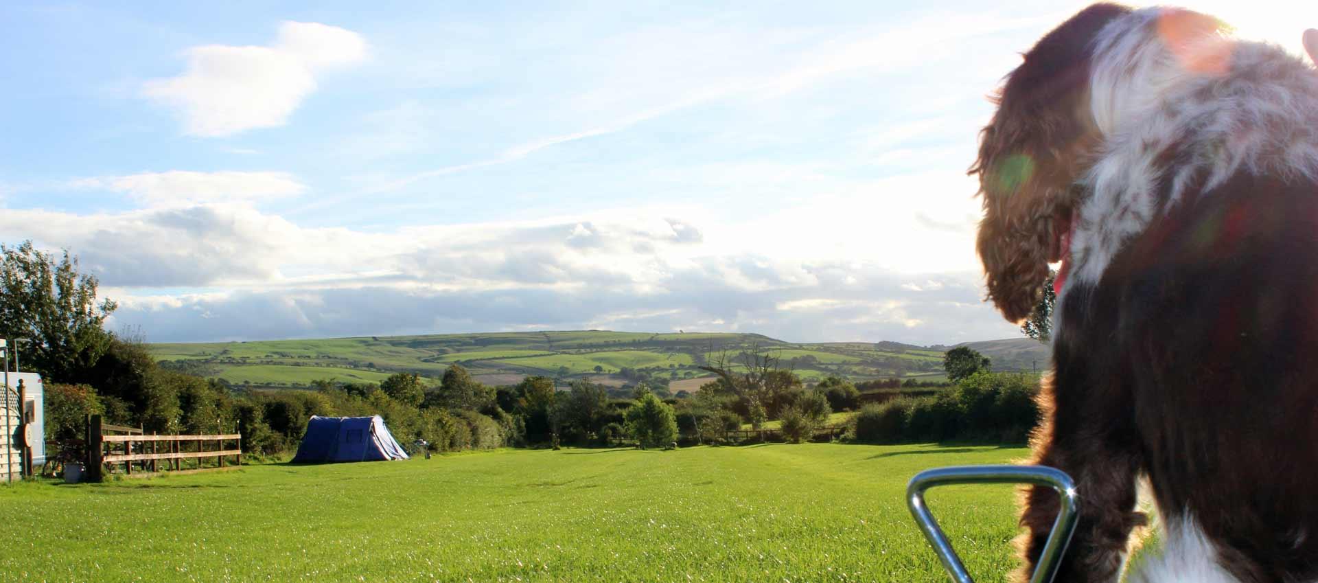 Serenity campsite tent field
